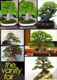 compare prices on oak trees sale shopping buy low price