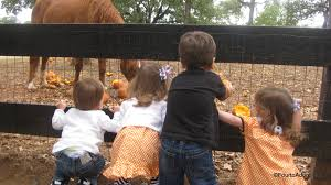 Pumpkin Patch Frisco Tx by Flower Mound Pumpkin Patch Spot To Visit With Tots U2013 Four To Adore