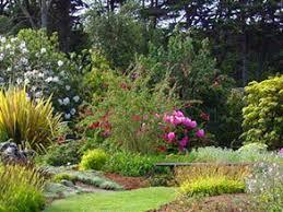 botanical gardens fort bragg ca festival of lights special events emerald dolphin inn