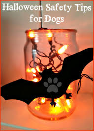 halloween safety tips halloween safety tips for dogs