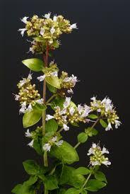 plants native to scotland the 25 best british wild flowers ideas on pinterest british