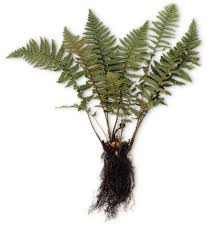 images of plants what is a plant different types of plants dk find out