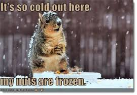 It S So Cold Meme - it s so cold out here my nuts are frozen squirrel meme picsmine
