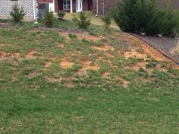 Backyard Soil Any Suggestions On Getting Grass To Grow In Rocky Clay Soil Lawn
