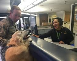 alaska adds new discount for pets of military members alaska