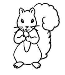 grey squirrel coloring page grey squirrel coloring pagejpg