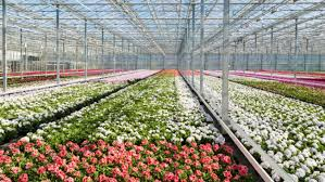 melbourne international flower and garden show 2015 aroundyou