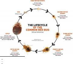 Dont Let The Bed Bugs Bite The 25 Best Bed Bug Report Ideas On Pinterest Bed Bugs Hotels
