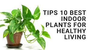 best indoor house plant tips 10 best indoor plants for healthy living youtube