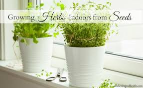 herbs indoors growing herbs indoors from seeds our heritage of health