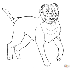 download coloring pages bulldog coloring pages coloring pages of