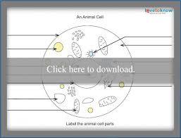 basics of plant cell biology lovetoknow