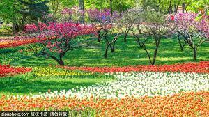 Beijing Botanical Garden Tulip Season In Beijing Botanical Garden