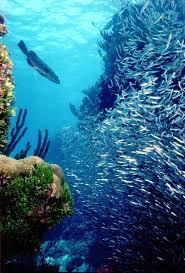 16 best underwater maldives images on pinterest underwater