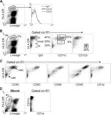 parallel loss of myeloid and plasmacytoid dendritic cells from