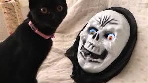halloween cat vs skull mask youtube