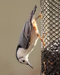 33 birds virginia leave awe