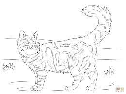 maine coon cat coloring page free printable coloring pages