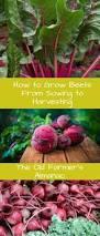 40 best indoor vegetable gardening images on pinterest indoor