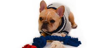 pet sweaters pet sweaters in2green