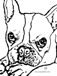 majestic looking boston terrier coloring page dog coloring pages