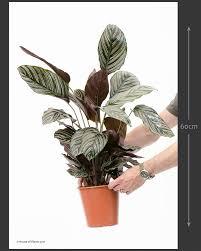 house plants house of plants