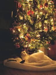 How To Trim A Real Christmas Tree - lisa earthgirl u2013 gardening tips and helpful advice fresh