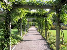 Plants For Pergolas by The Importance Of Outdoor Living Spaces For San Diego Homes