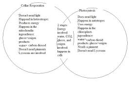 Photosynthesis And Cellular Respiration Worksheet Fermentation And Cellular Respiration Venn Diagram