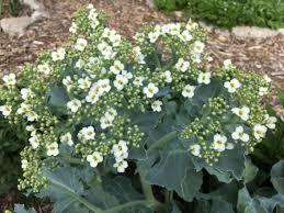 edible ornamentals bruno s