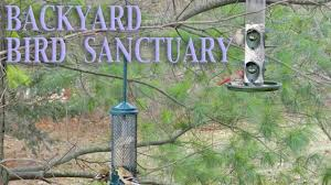 backyard bird sanctuary youtube