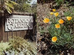 Uc Berkeley Botanical Gardens Lark In Berkeley Mather Redwood Grove Uc Botanical
