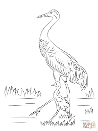 sandhill crane with cute baby coloring page free printable