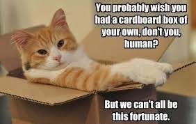 Cardboard Box Meme - cats and boxes little things that amuse me