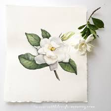 gardenia greeting cards u0026 art prints made from original