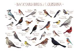 Louisiana birds images Backyard birds of louisiana field guide art print jpg