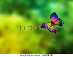 beautiful butterfly stock images royalty free images vectors