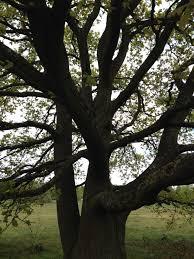 tree symbolism the symbolism of trees in ignoring gravity