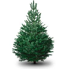 real christmas trees delivery pines and needles