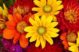 Colorful Pictures Autumn Flower Wallpapers Fhdq Desktop Backgrounds 46