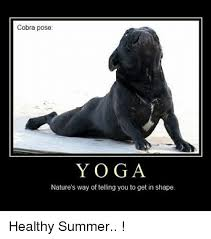 Funny Yoga Meme - cobra pose yoga nature s way of telling you to get in shape healthy