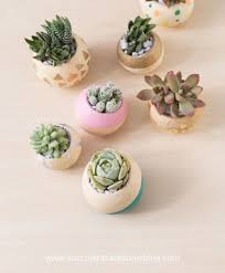 cute succulents diy cute round painted planters with succulents gardenoholic