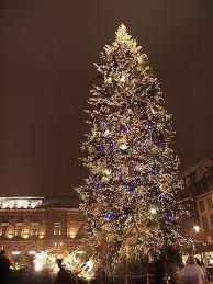 biggest christmas tree britains biggest christmas tree flickr