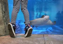 photos seaquest aquarium hosts hands on activities at layton