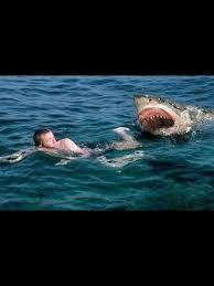 Shark Attack Meme - 2472 best great white shark three images on pinterest great white