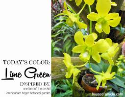 Green Color Palette by House Of Smichi Color Therapy Lime Green Orchid Color Palette
