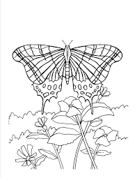 colouring flowers and butterflies coloring pages on decoration