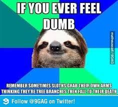 Best Sloth Memes - 42 best rape sloth images on pinterest creepy sloth meme sloth