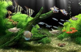 wallpaper ikan bergerak untuk pc clipart aquarium bergerak untuk pc clipartfox best games
