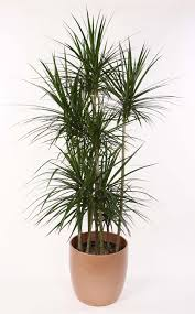 Types Of Indoor Plants Earth Day 8 Air Purifying House Plants